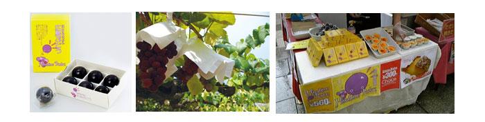 竹原産キャンベルを使った新商品開発プロジェクトイメージ